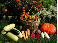 Биоудобрения и активаторы роста растений
