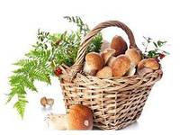 Домашнее выращивание грибов, овощей и ягод