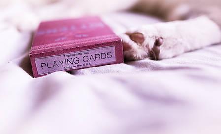 Карти гральні | Madison Kittens by Ellusionist, фото 2