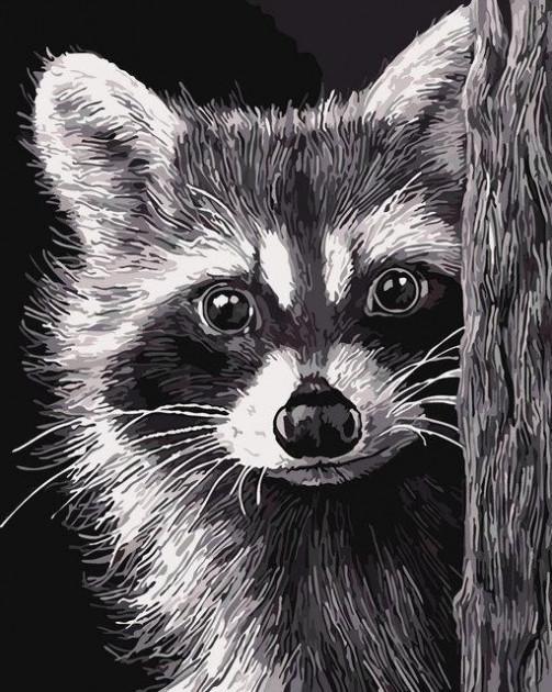 Картина по номерам Енот, 40x50 см., Art Story