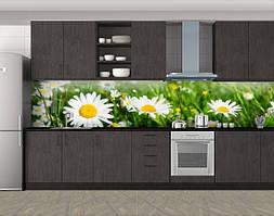 Кухонный фартук Солнечные ромашки, Фотопечать скинали на кухню, Цветы, зеленый