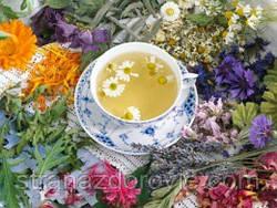Травяные, цветочные и ягодные чаи – когда их пить и чем они полезны?