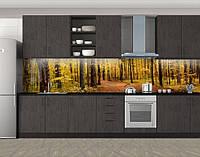 Кухонный фартук Деревья в осеннем лесу, Стеновая панель для кухни с фотопечатью, Природа, коричневый