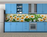 Кухонный фартук Ромашки 3, Пленка для кухонного фартука с фотопечатью, Цветы, зеленый, фото 1