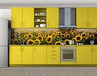 Кухонный фартук Подсолнухи поле, Скинали с фотоизображением на самоклеящейся пленке, Цветы, желтый