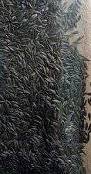 салат батавія
