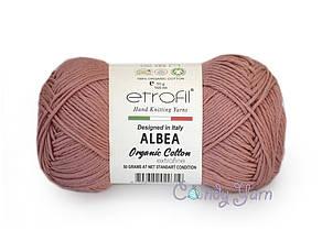Etrofil Albea, Розовая гвоздика №031