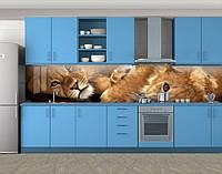 Кухонный фартук Львица и львенок, Защитная пленка на кухонный фартук с фотопечатью, Животный мир, бежевый