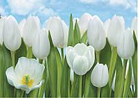"""Фотообои бумажные на стену, 134х194 см """"Тюльпаны"""", фотообои готовые, фотообои природа, 8 листов"""