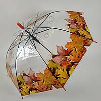 """Прозрачный зонт-трость с изображением кленовых листьев, полуавтомат от фирмы """"Feeling rain"""" - 211-6, фото 1"""