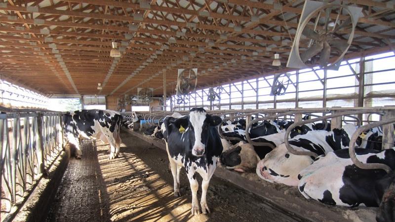 Молочные кооперативы – для кого и когда