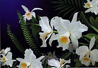 """Фотообои бумажные на стену, 194х268 см """"Дикая орхидея"""", фотообои готовые, фотообои природа, 16 листов"""