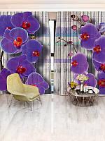 Фотошторы орхидея (29361_4_1)