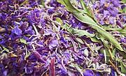 Іван-чай – диво-рослина