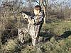 Костюм дождевик детский Лесоход камуфляж Камыш, фото 2