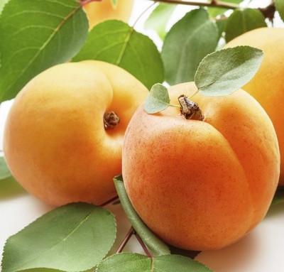 "Саженцы абрикоса ""Голд Рич"""