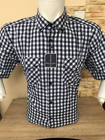 Рубашка  коттон Cottarelli с коротким рукавом, фото 2