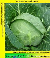 Семена капусты «Амагер» 100 г фасовка, фото 1