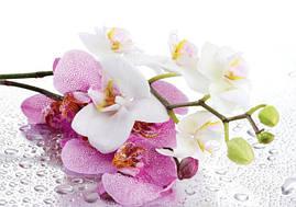 """Пакет для подарка гигант горизонтальный """"Веточка орхидеи"""" 46 х 33 см  (6 шт/уп)"""