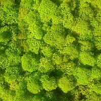 Стабилизированный мох ягель Зеленый весенний 100 грамм (Норвегия)