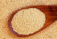 Амарант зерна, Харьковский сорт