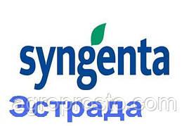 Гибрид подсолнечника Эстрада (Syngenta)