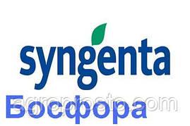 Гибрид подсолнечника Босфора (Syngenta)