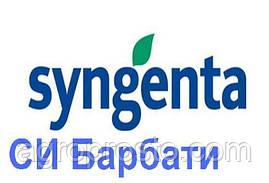 Гибрид подсолнечника СИ Барбати (Syngenta)
