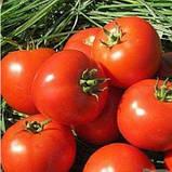 Насіння томату Бехрам F1 (500 сем.) Enza Zaden, фото 2