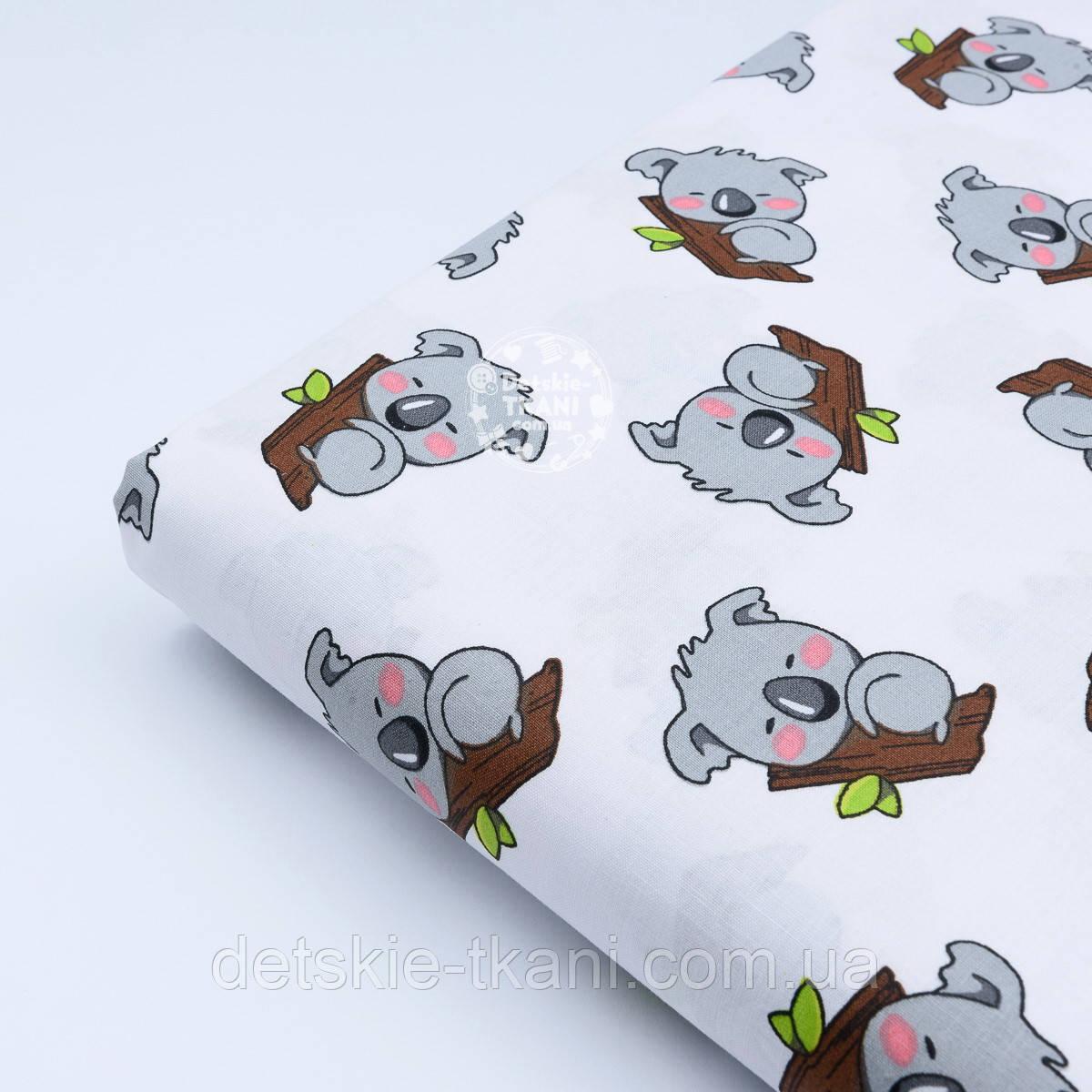 Лоскут ткани №828а с серыми мишками коала на веточке дерева