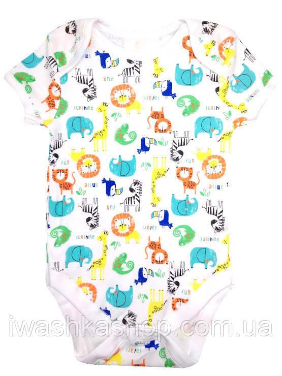 Белое боди с короткими рукавами и разноцветными животными для малышей 3 - 6 месяцев, р. 68, Primark baby