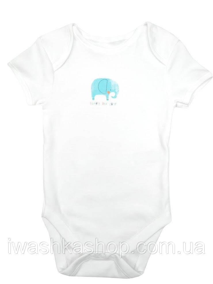 Біле боді з коротким рукавом зі слоненям для малюків 3 - 6 місяців, розмір 68, Primark baby, Німеччина