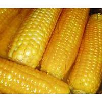 Кукуруза: Кадр 267 (репр.1)