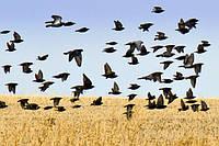Вредительство птиц в различных сферах деятельности