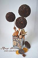 Кавове дерево в горщику з кокосового волокна