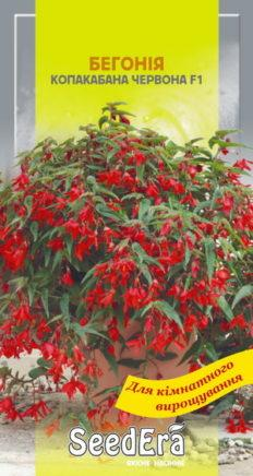Семена бегония боливийская Копакабана