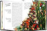 Метелики — казкові створіння. Серія: Моє хобі. Видавництво: Ранок. Енциклопедія, фото 2