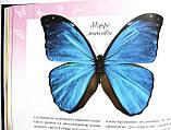 Метелики — казкові створіння. Серія: Моє хобі. Видавництво: Ранок. Енциклопедія, фото 3