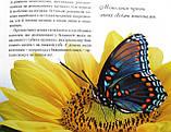 Метелики — казкові створіння. Серія: Моє хобі. Видавництво: Ранок. Енциклопедія, фото 4