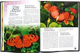 Метелики — казкові створіння. Серія: Моє хобі. Видавництво: Ранок. Енциклопедія, фото 5
