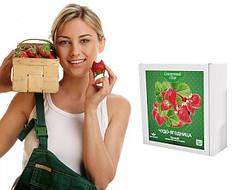 Диво-ягодница Казковий збір – набір для вирощування полуниці на підвіконні