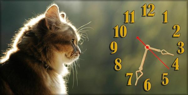 Часы настенные N 13, 30х60 для кухни, гостиной, детской, спальни. Подарок