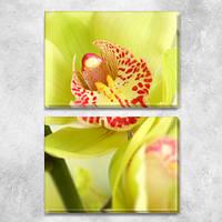 Желтая орхидея, модульная картина (Цветы), на ПВХ ткани, 63х45 см, (30х45-2), фото 1
