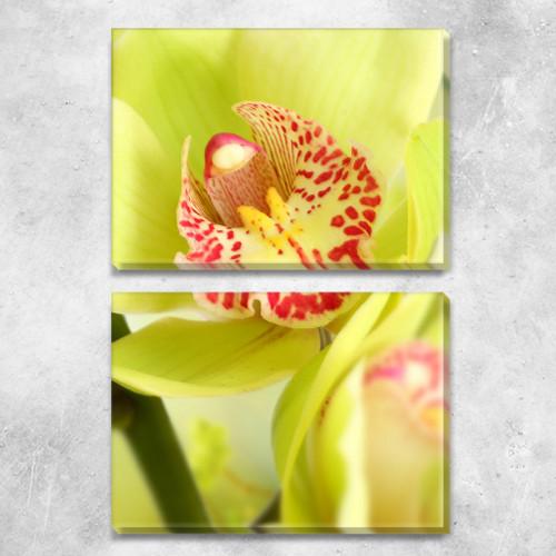 Желтая орхидея, модульная картина (Цветы), на ПВХ ткани, 63х45 см, (30х45-2)