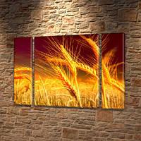 Модульная картина Колоски ячменя, поле колосков, на Холсте син., 75x100 см, (75x18-2/75х60), Триптих