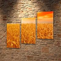 Модульная картина Спелый ячмень, колоски, поле колосков на Холсте, 100х110 см, (70x35-3), Триптих