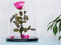 Роза в стеклянной колбе Малиновый Радолит.