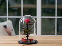 Роза в стеклянной колбе Алый рубин.