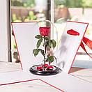 Коробка для троянди в колбі 22*22*33 див., фото 4