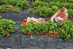 Борьба с сорняками при помощи агроволокна